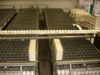 Bosgraaf - Cheese equipment